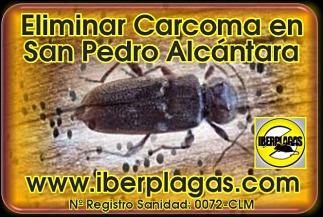 Eliminar Carcoma en San Pedro Alcántara