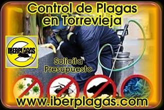 Presupuesto Control de Plagas en Torrevieja