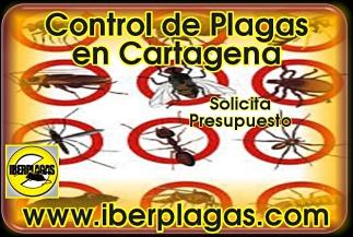 Presupuesto control de plagas en Cartagena