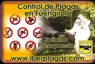 Presupuesto Control de Plagas en Fuengirola