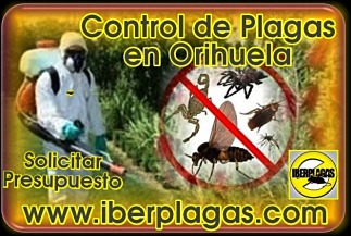 Presupuesto control de plagas en Orihuela