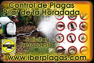 Presupuesto Control de Plagas en Pilar de la Horadada