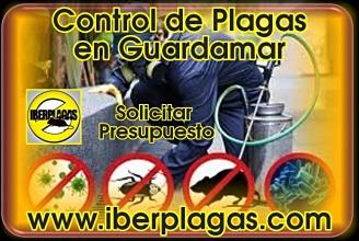 Presupuesto control de plagas en Guardamar del Segura