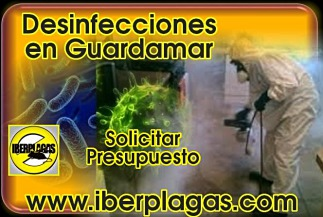 Presupuesto de Desinfección en Guardamar del Segura