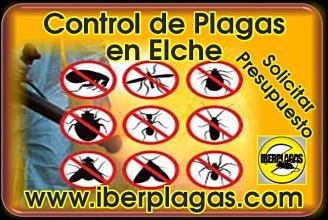 Presupuesto Control de plagas en Elche