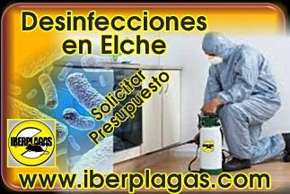 Presupuesto desinfecciones en Elche