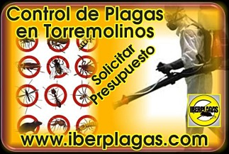 Presupuesto Control de Plagas en Torremolinos