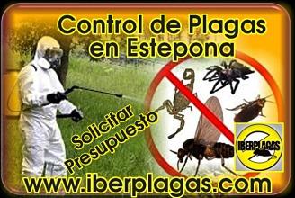 Presupuesto Control de Plagas en Estepona