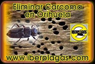 eliminar carcoma en Orihuela