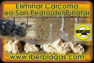 eliminar carcoma en San Pedro del Pinatar