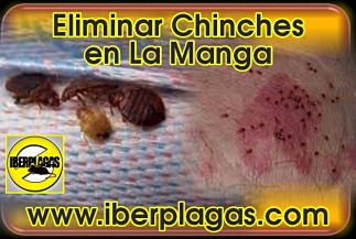 eliminar chinches en La Manga del Mar Menor