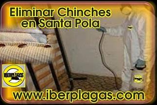 eliminar chinches de cama en Santa Pola