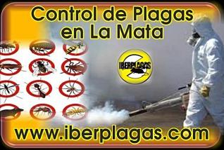 Control de plagas en La Mata de Torrevieja