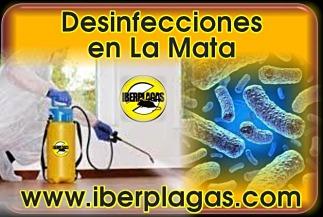 Desinfecciones en La Mata