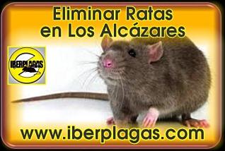 Eliminar ratas en Los Alcázares
