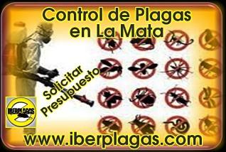 Presupuesto Control de Plagas en La Mata
