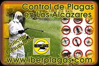Presupuesto control de plagas en Los Alcázares