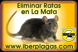 eliminar ratas en La Mata