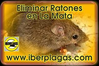 Eliminar ratones en La Mata de Torrevieja