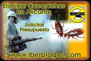 Presupuesto eliminar cucarachas en Alicante