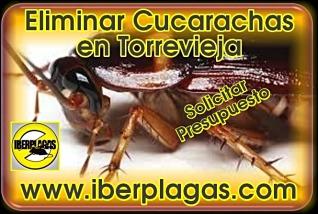 Presupuesto para eliminar cucarachas en Torrevieja