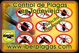 Control de Plagas en Torrevieja