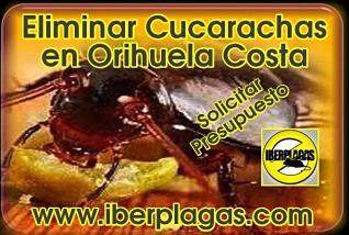 Presupuesto eliminar cucarachas en Orihuela Costa