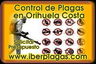 Presupuesto control de plagas en Orihuela Costa