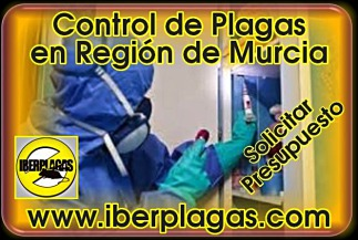 Presupuesto control de plagas en Murcia