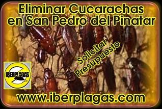 Presupuesto para eliminar cucarachas en San Pedro del Pinatar