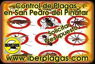 presupuesto control de plagas en San Pedro del Pinatar