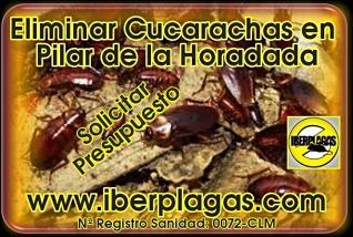 Presupuesto eliminar cucarachas en Pilar de la Horadada