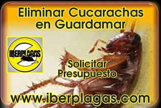 presupuesto eliminar cucarachas en Guardamar