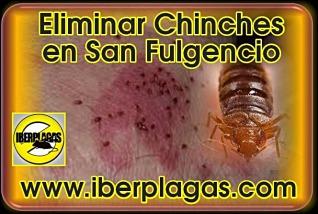eliminar chinches en San Fulgencio