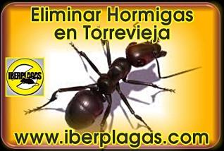 Eliminar Hormigas en Torrevieja