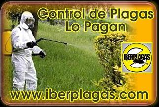 Control de Plagas en Lo Pagan