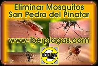 eliminar mosquitos en San Pedro del Pinatar