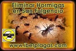 Eliminar hormigas en San Fulgencio