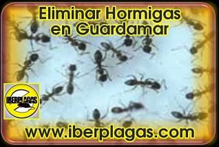 Eliminar hormigas en Guardamar del Segura