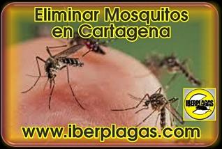 Eliminar mosquitos en Cartagena