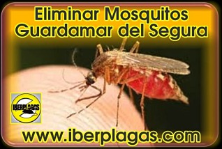 Eliminar mosquitos en Guardamar del Segura