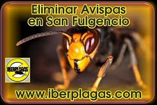 eliminar avispas en San Fulgencio