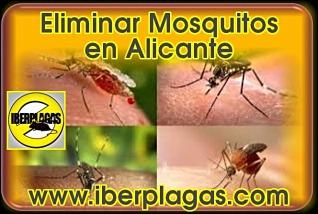 Eliminar mosquitos en Alicante