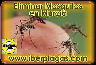 Eliminar mosquitos en Murcia