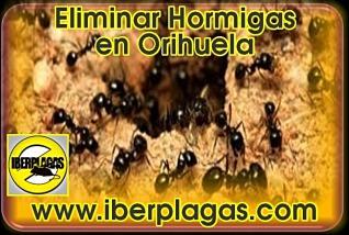 Eliminar Hormigas en Orihuela