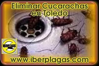 Eliminar cucarachas en Toledo