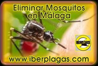 Eliminar Mosquitos en Málaga