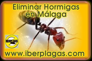 Eliminar Hormigas en Málaga
