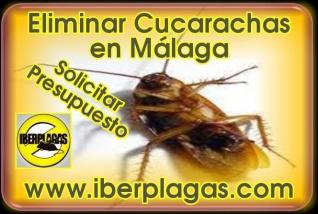 Eliminar cucarachas en Málaga