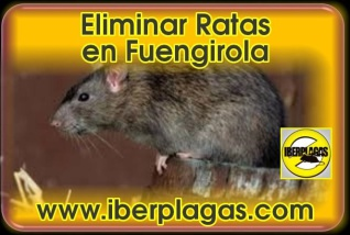 Eliminar Ratas en Fuengirola